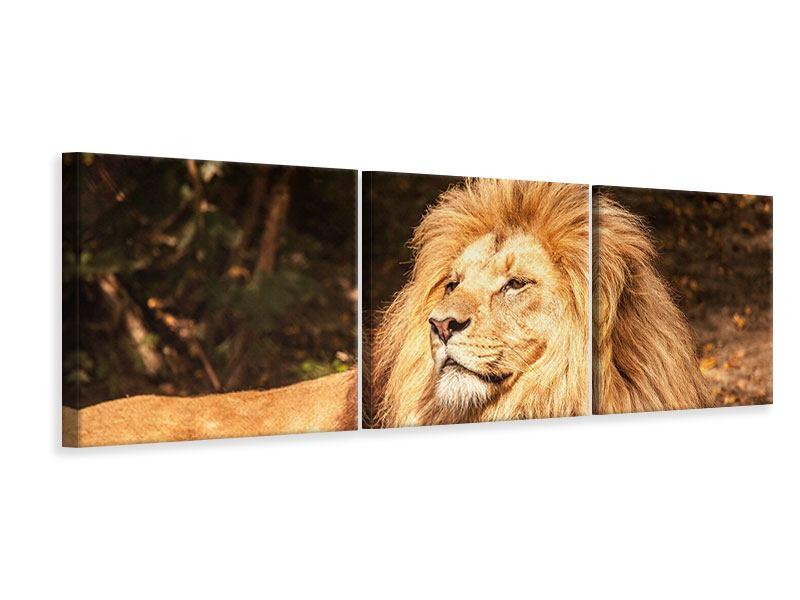 Panorama Leinwandbild 3-teilig Löwe