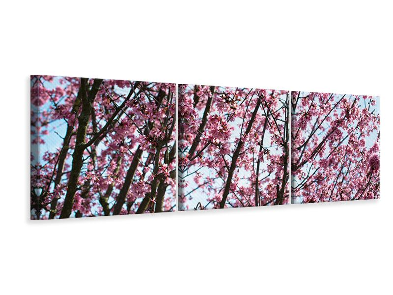 Panorama Leinwandbild 3-teilig Japanische Blütenkirsche