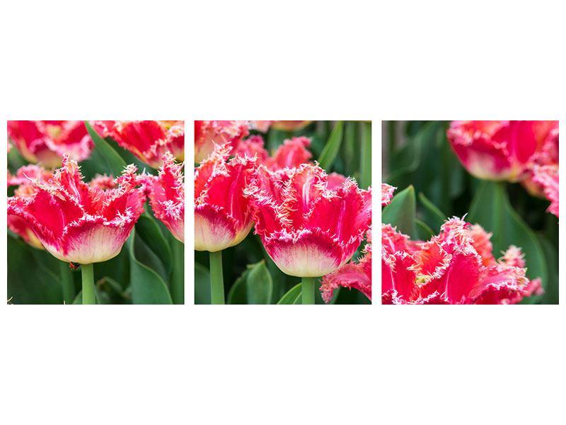 Panorama Leinwandbild 3-teilig Die Tulpenwiese