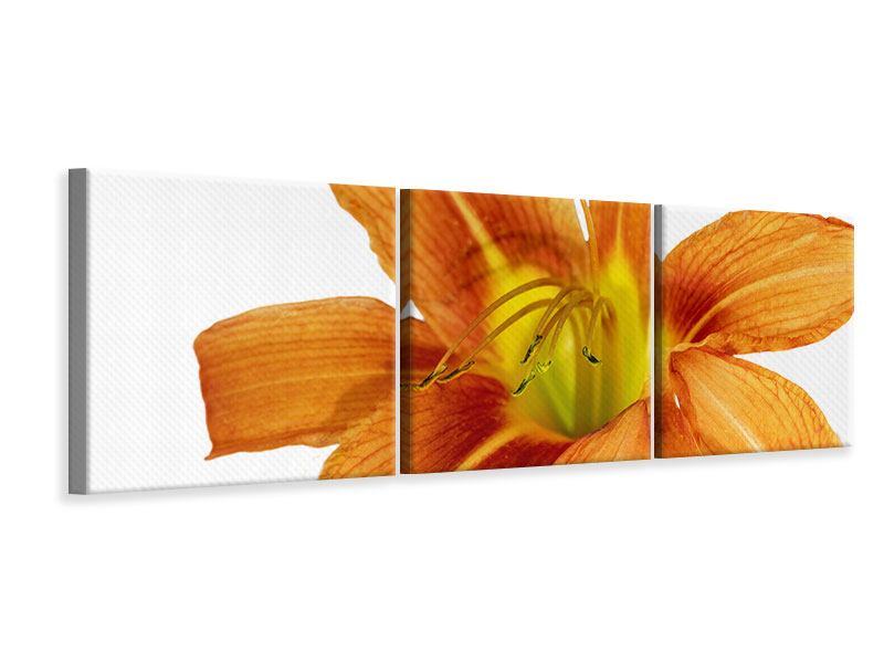 Panorama Leinwandbild 3-teilig Die Tiger-Lilie