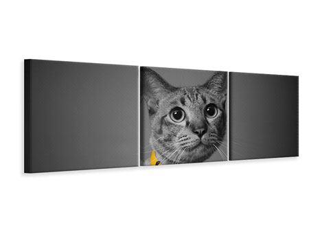 Panorama Leinwandbild 3-teilig Katzenlady
