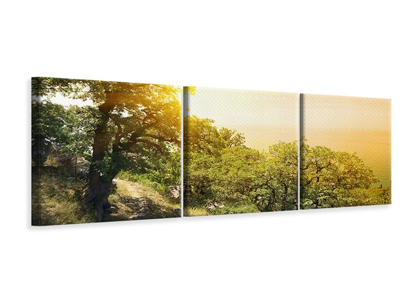 Panorama Leinwandbild 3-teilig Sonnenuntergang in der Natur