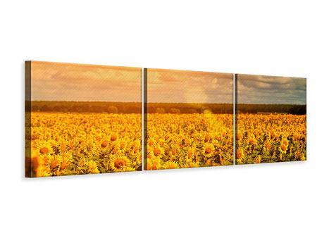 Panorama Leinwandbild 3-teilig Goldenes Licht für Sonnenblumen