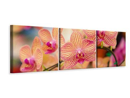 Panorama Leinwandbild 3-teilig Exotische Orchideen