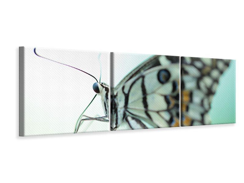 Panorama Leinwandbild 3-teilig Schmetterling XXL