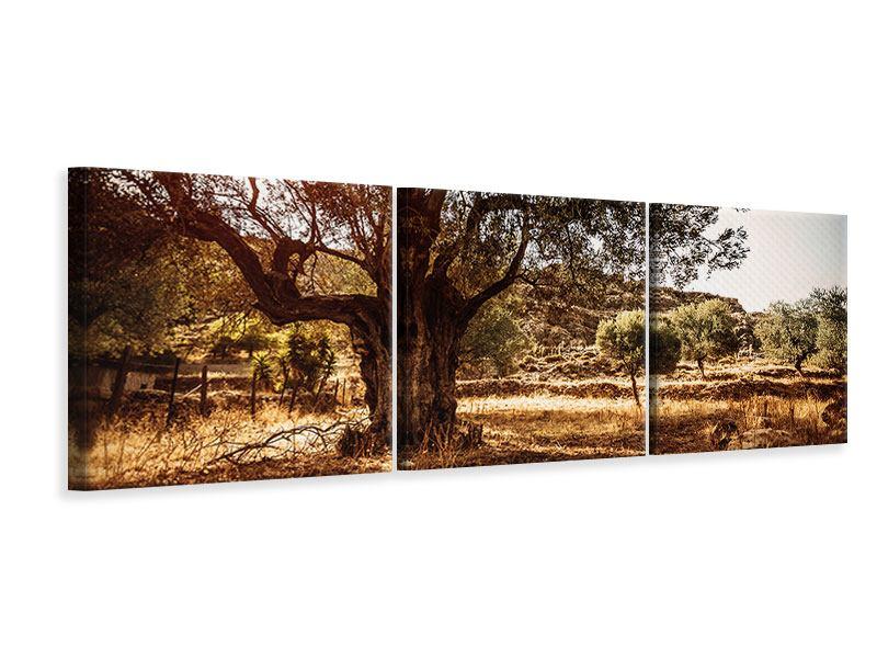 Panorama Leinwandbild 3-teilig Olivenhain