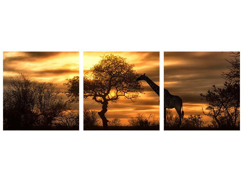 Panorama Leinwandbild 3-teilig African Dreams