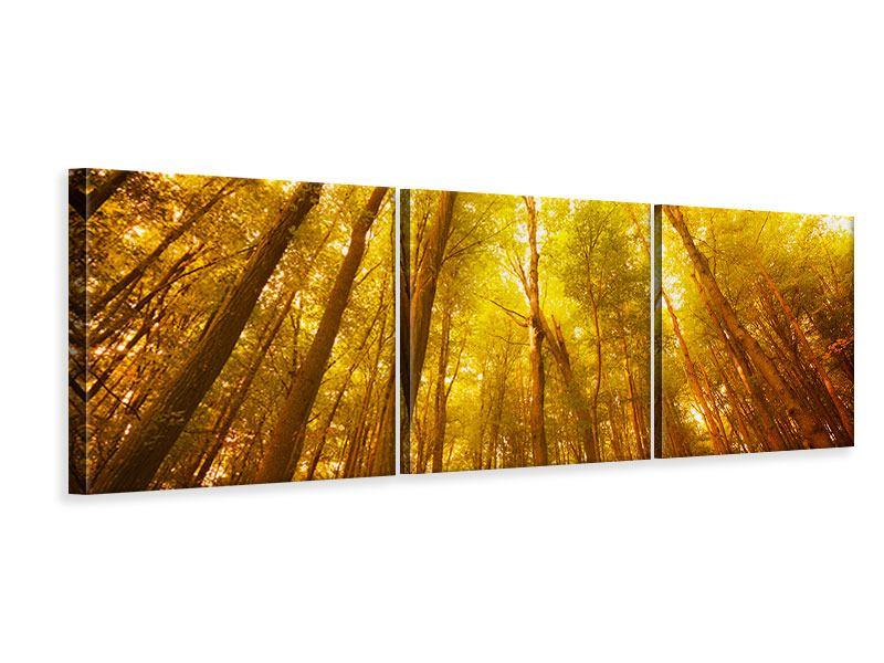 Panorama Leinwandbild 3-teilig Herbstwald