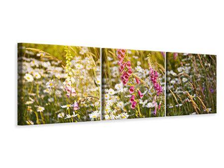 Panorama Leinwandbild 3-teilig Sommerliche Blumenwiese