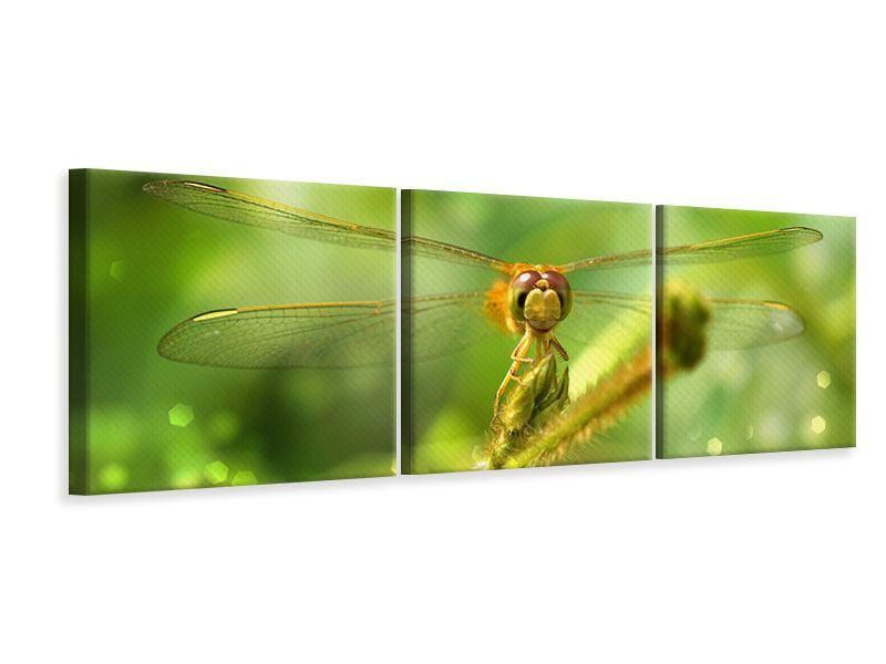 Panorama Leinwandbild 3-teilig XXL-Libelle