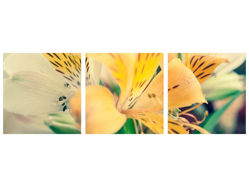 Panorama Leinwandbild 3-teilig Tigerlilien