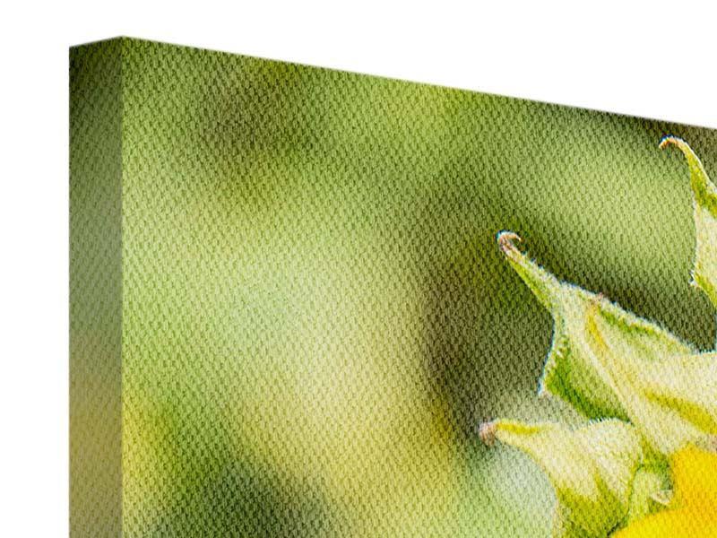 Panorama Leinwandbild 3-teilig Wilde Sonnenblume