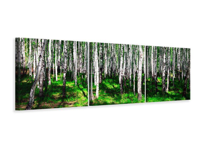 Panorama Leinwandbild 3-teilig Sommerlicher Birkenwald