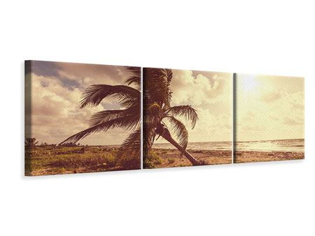 Panorama Leinwandbild 3-teilig Die schiefe Palme