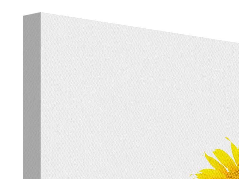 Panorama Leinwandbild 3-teilig Das Sonnenblumenfeld