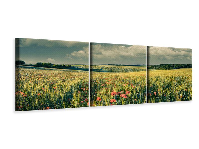 Panorama Leinwandbild 3-teilig Der Mohn im Weizenfeld