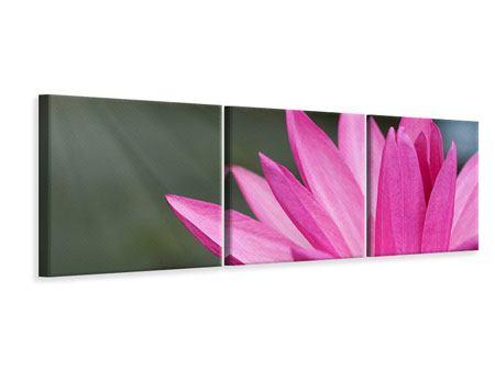 Panorama Leinwandbild 3-teilig XXL Seerose in Pink