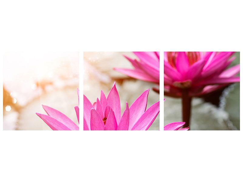Panorama Leinwandbild 3-teilig Lotus-Duo