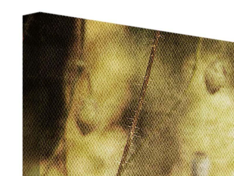 Panorama Leinwandbild 3-teilig Der wilde Mohn