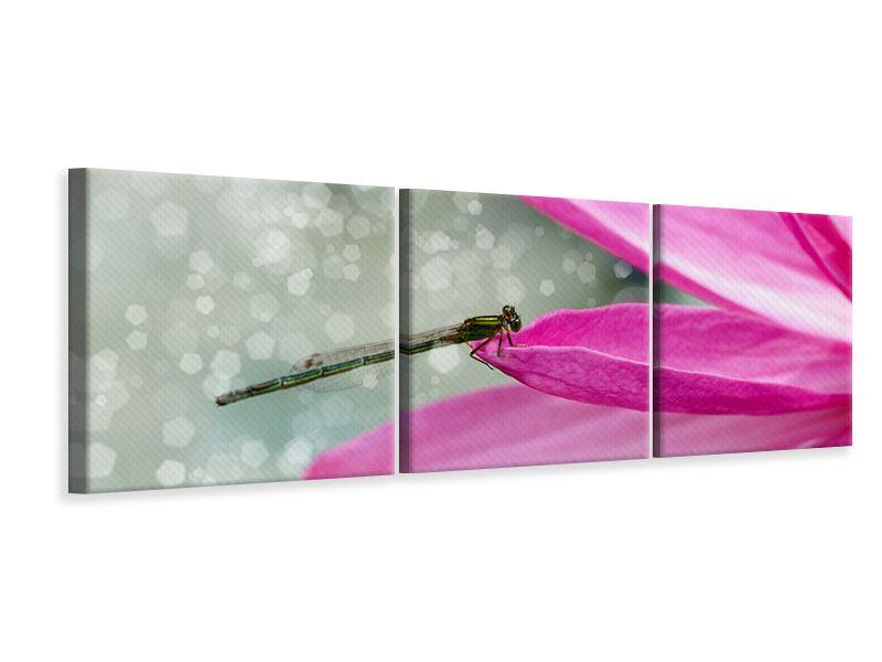 Panorama Leinwandbild 3-teilig Libelle auf dem Seerosenblatt