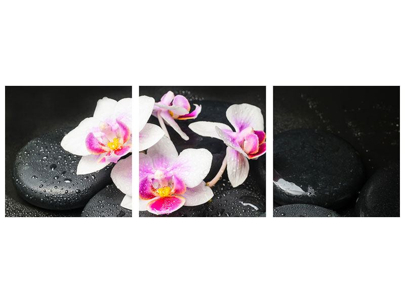 Panorama Leinwandbild 3-teilig Feng-Shui-Orchidee Zen