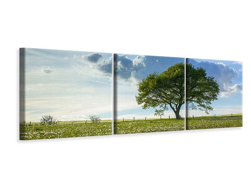 Panorama Leinwandbild 3-teilig Frühlingsbaum