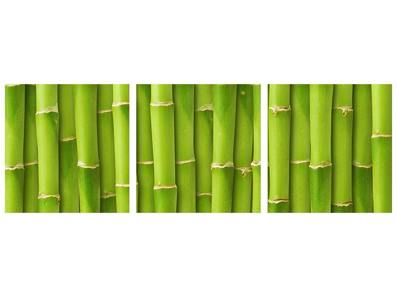 Panorama Leinwandbild 3-teilig Bambuswand