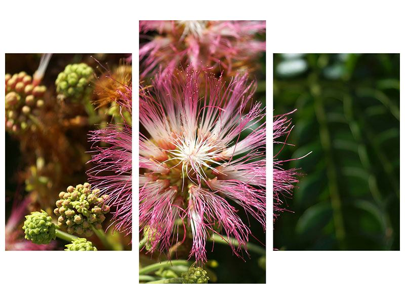 Leinwandbild 3-teilig modern Die Regenbaumblüte