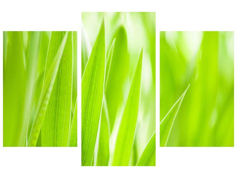 Leinwandbild 3-teilig modern Gras XXL