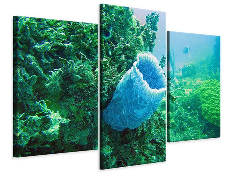 Leinwandbild 3-teilig modern Korallen