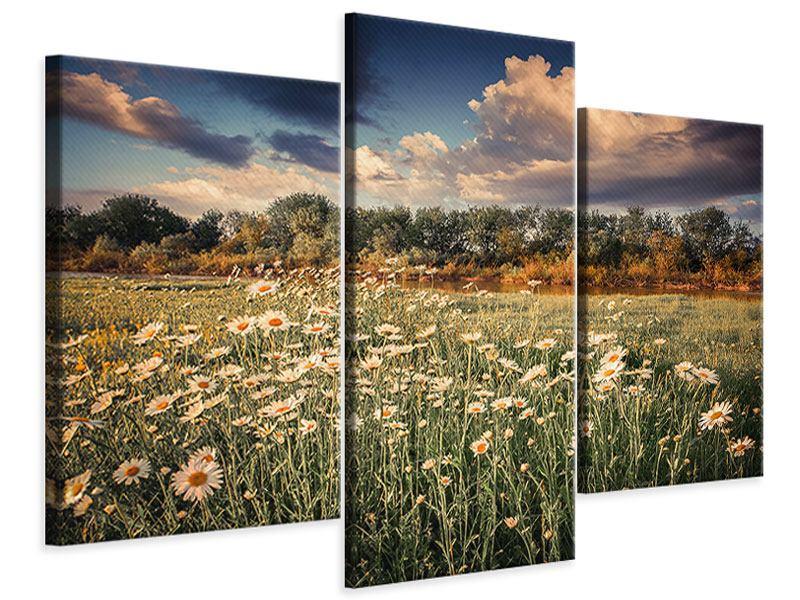Leinwandbild 3-teilig modern Die Wiesenmargerite am Fluss