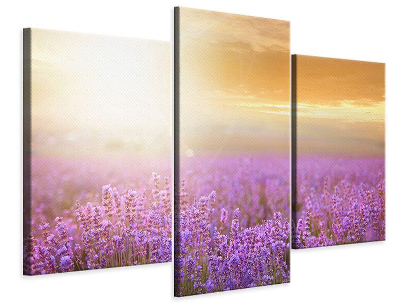 Leinwandbild 3-teilig modern Sonnenuntergang beim Lavendelfeld