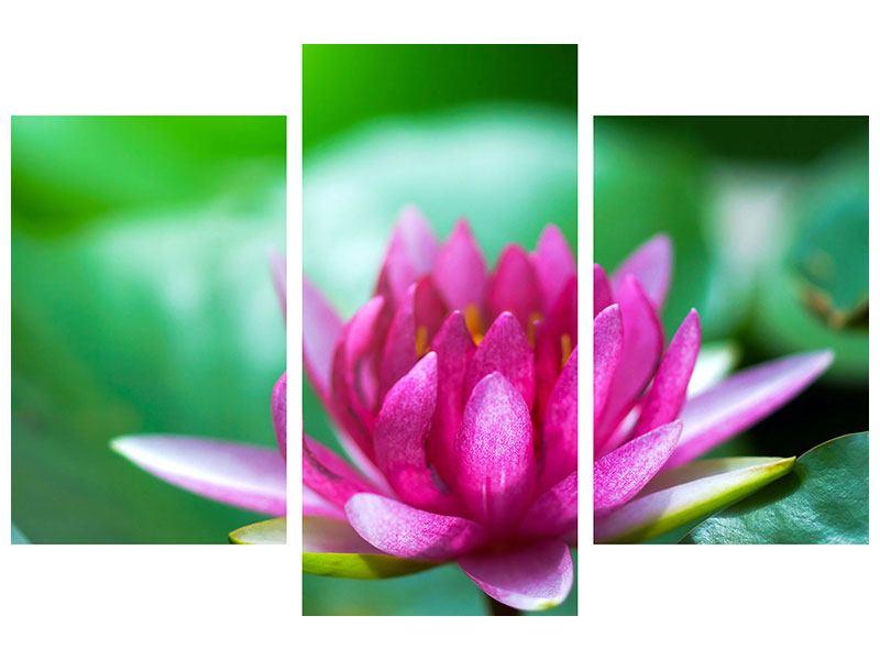 Leinwandbild 3-teilig modern Lotus in Pink