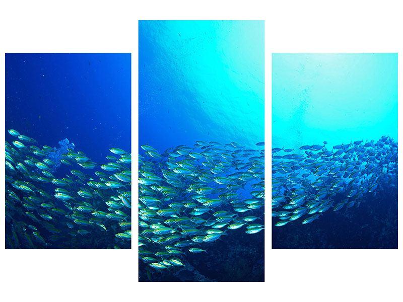 Leinwandbild 3-teilig modern Fischschwarm