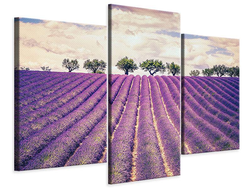 Leinwandbild 3-teilig modern Das Lavendelfeld