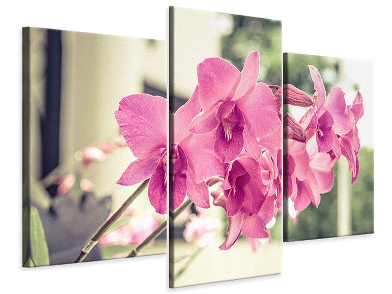 Leinwandbild 3-teilig modern Ein Fensterplatz für die Orchideen