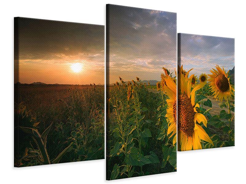 Leinwandbild 3-teilig modern Sonnenblumen im Lichtspiel