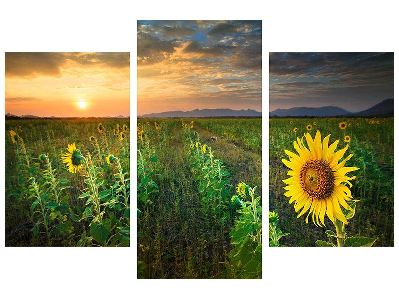 Leinwandbild 3-teilig modern Sonnenblumenfeld im Abendrot