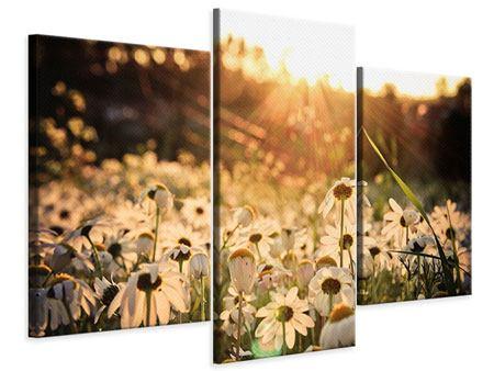 Leinwandbild 3-teilig modern Gänseblümchen bei Sonnenuntergang