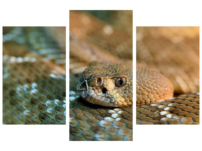 Leinwandbild 3-teilig modern Viper