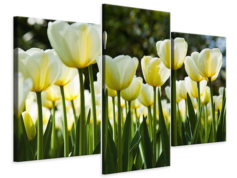 Leinwandbild 3-teilig modern Tulpen bei Sonnenuntergang