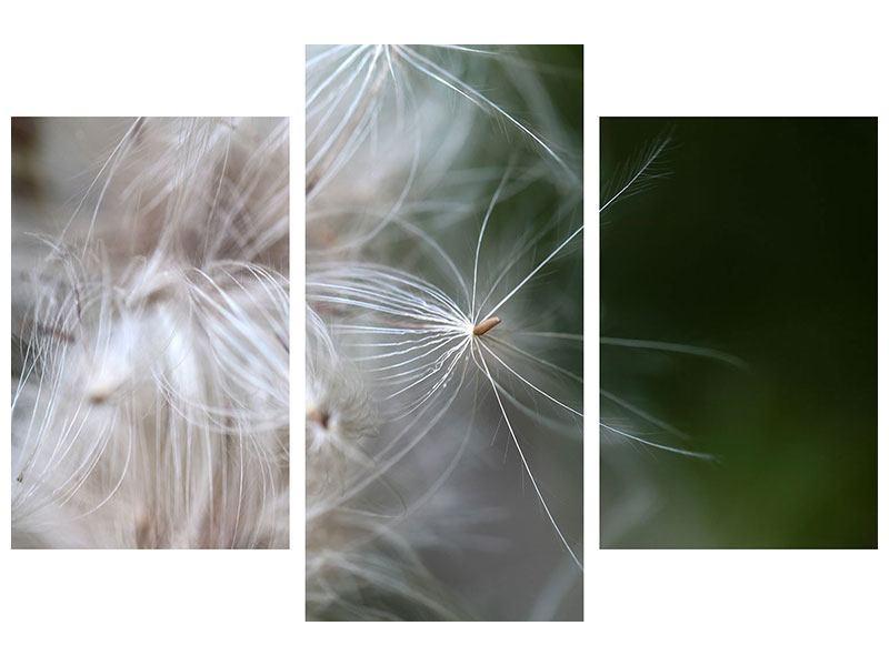 Leinwandbild 3-teilig modern Close up Blütenfasern