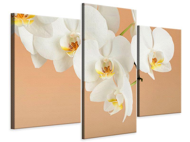 Leinwandbild 3-teilig modern Weisse Orchideenblüten