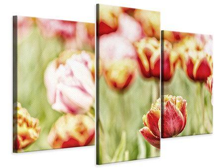 Leinwandbild 3-teilig modern Die Schönheit der Tulpe