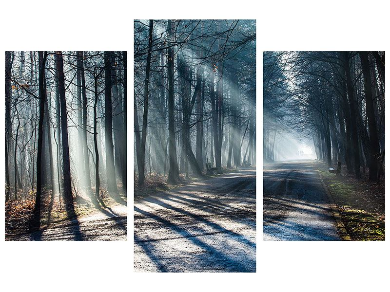 Leinwandbild 3-teilig modern Wald im Lichtstrahl
