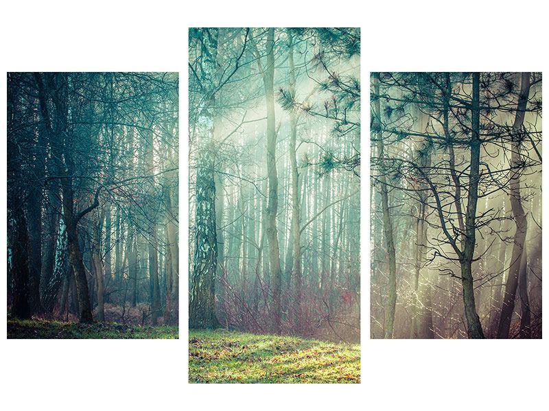 Leinwandbild 3-teilig modern Pinienwald