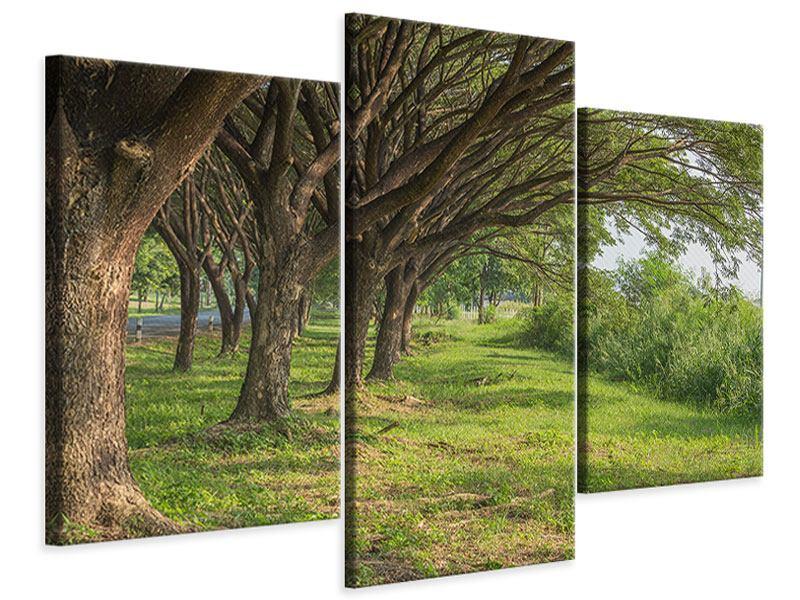 Leinwandbild 3-teilig modern Alter Baumbestand