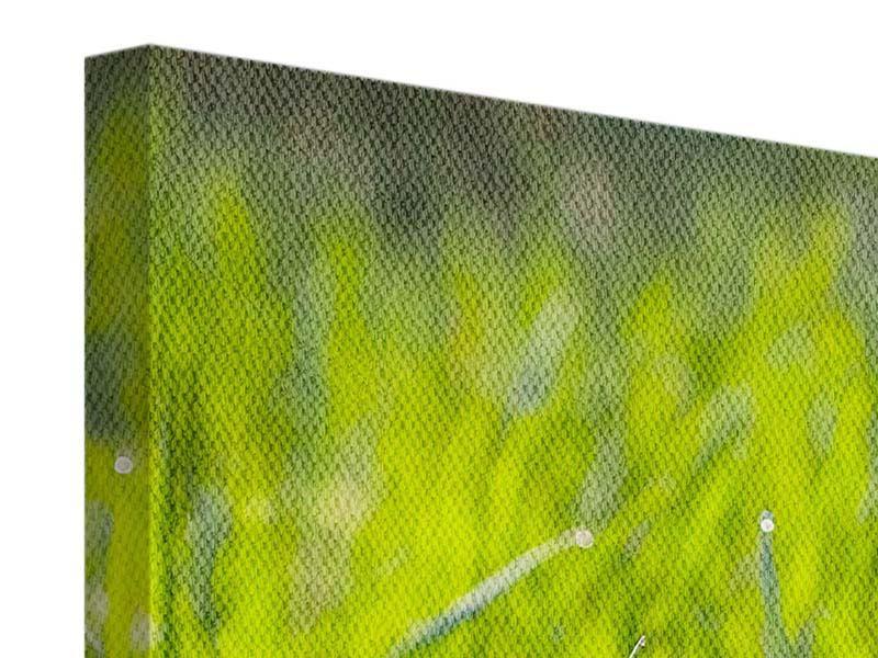 Leinwandbild 3-teilig modern Gras im Morgentau