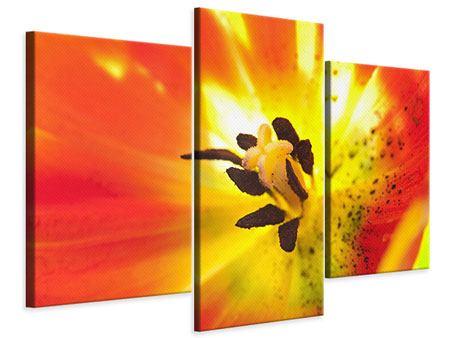 Leinwandbild 3-teilig modern Die Narbe einer Tulpe XXL