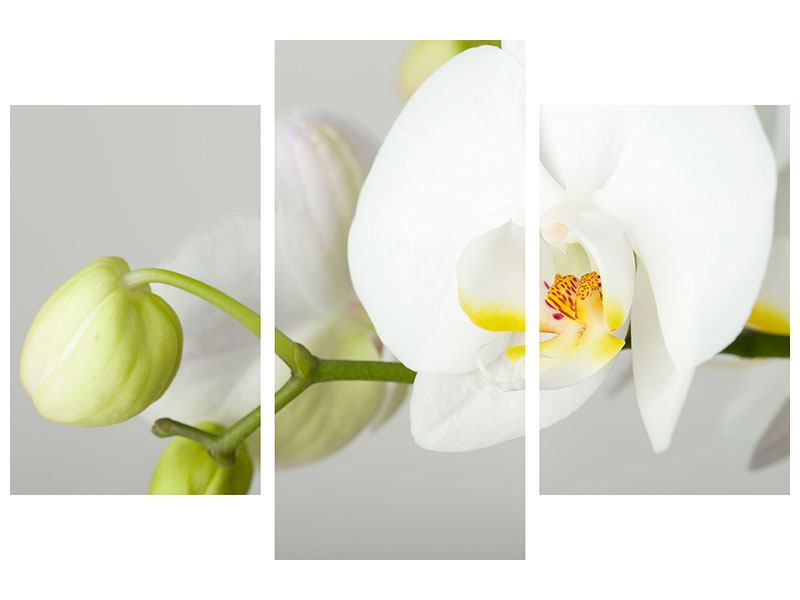 Leinwandbild 3-teilig modern Riesenorchidee
